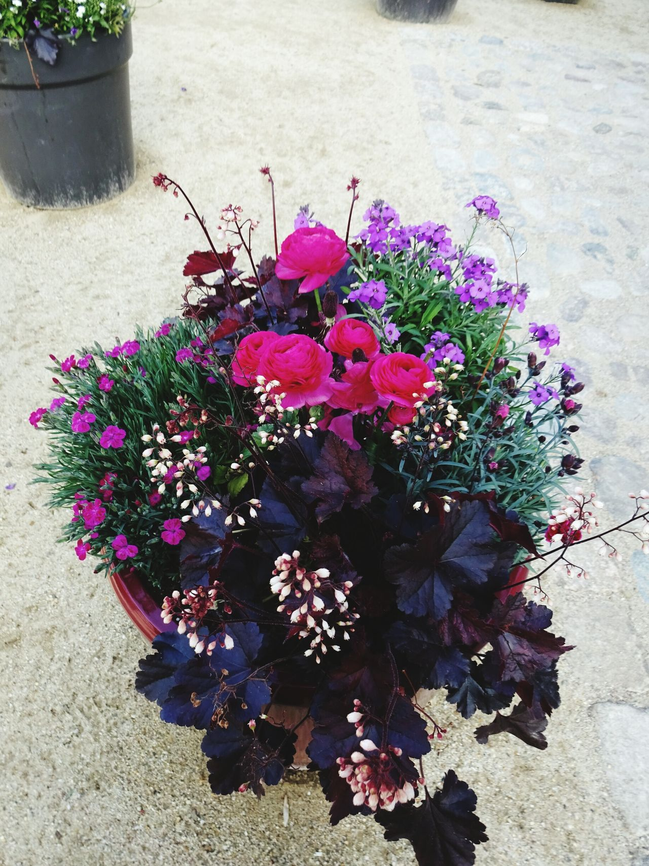 Flower Freshness Growth Nature Fragility Beauty In Nature Purple Plant Pink Color Petal No People Flower Head Outdoors Day Blooming Close-up