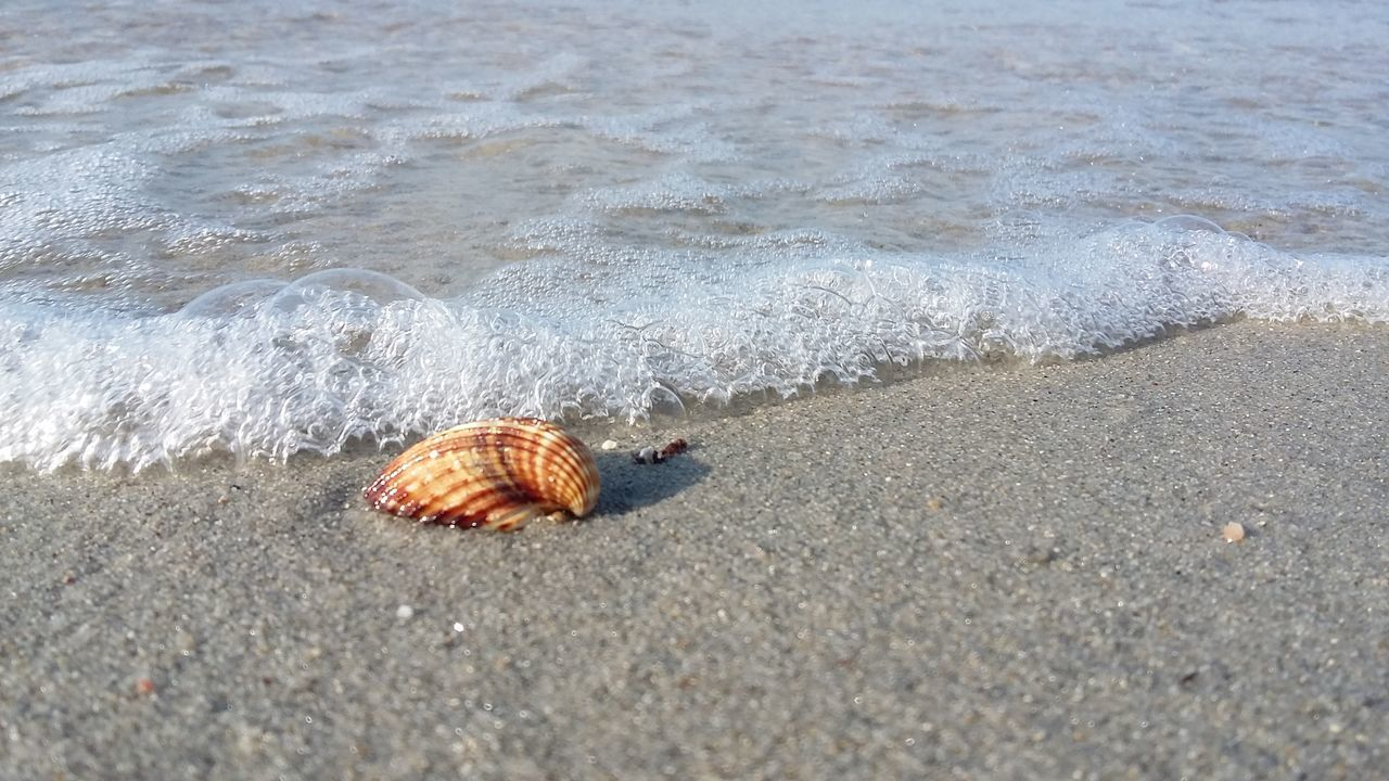 Beach Sand Nature Sea Water Animal Themes Outdoors No People Sea Life Beauty In Nature Greece Summer Seaview Travel Destinations Vacations Shell Shell On The Beach