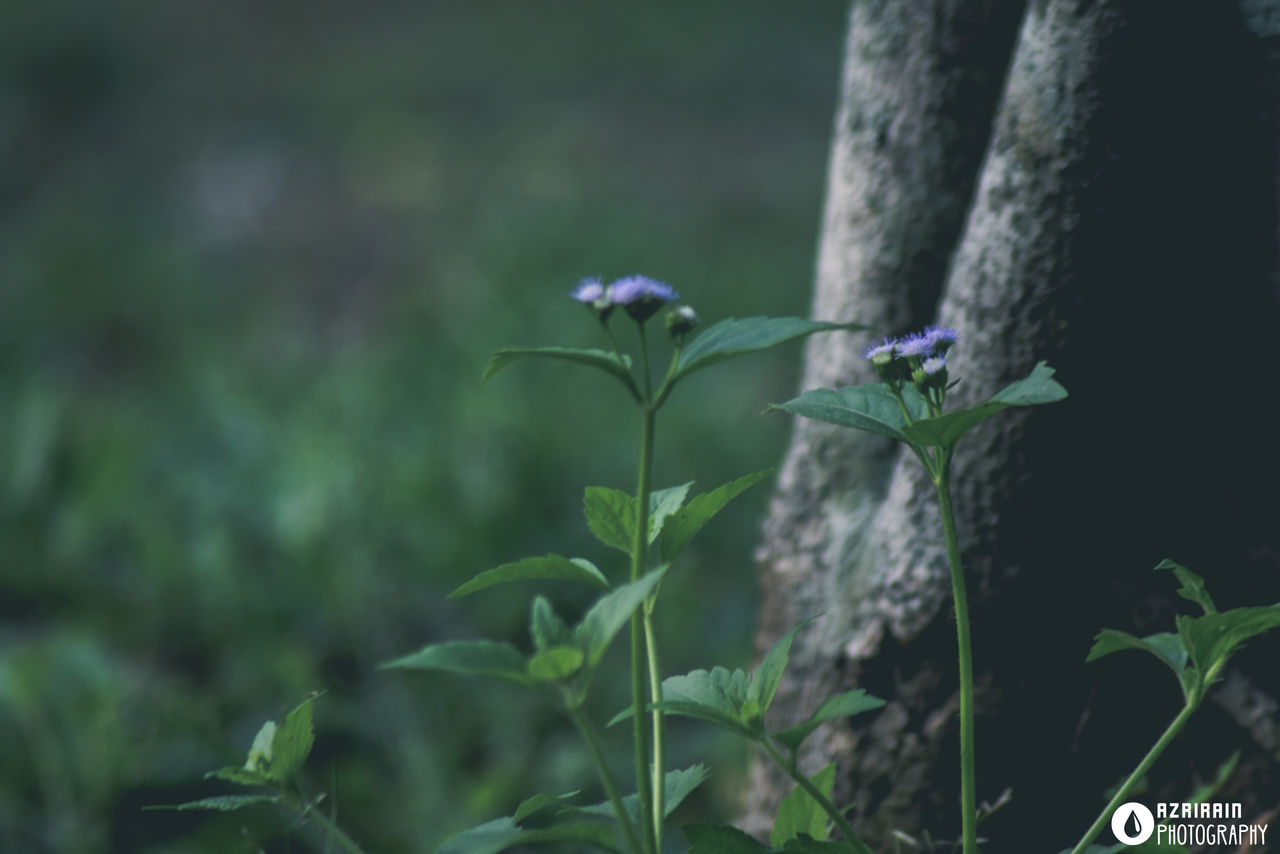 growth, plant, nature, outdoors, no people, beauty in nature, close-up, day, freshness