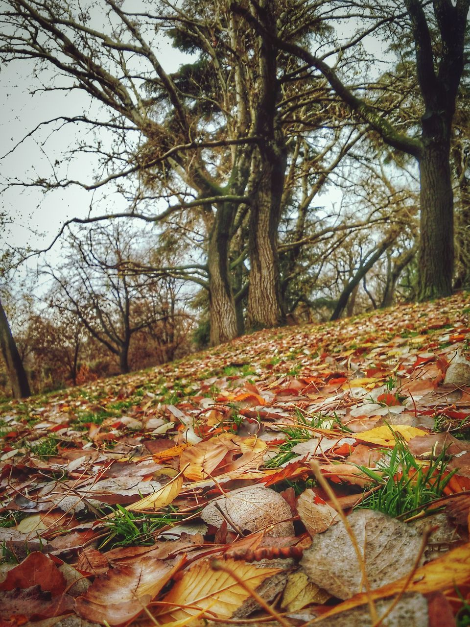 tree, autumn, nature, leaf, forest, tree trunk, change, tranquility, beauty in nature, scenics, branch, tranquil scene, no people, outdoors, growth, day, landscape, bare tree, sky