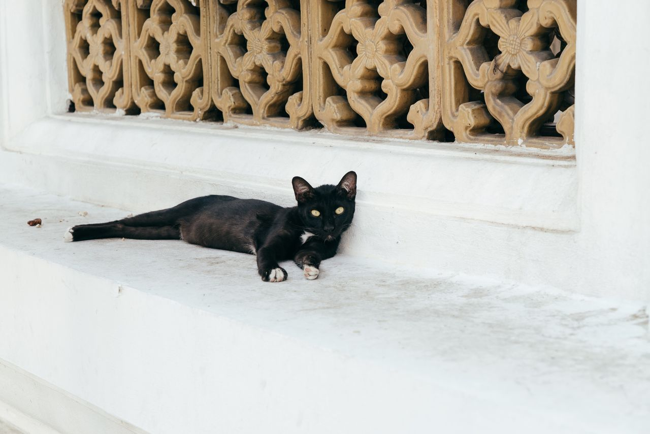 Cat Cat♡ Cat Lovers Cats Of EyeEm Temple Thailand Thailand_allshots Travel Pets Domestic Cat Domestic Animals Black Color Looking At Camera Feline