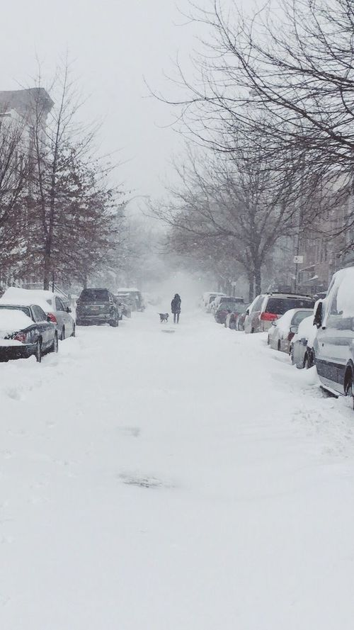 Snow Snow ❄ Brooklyn New York City