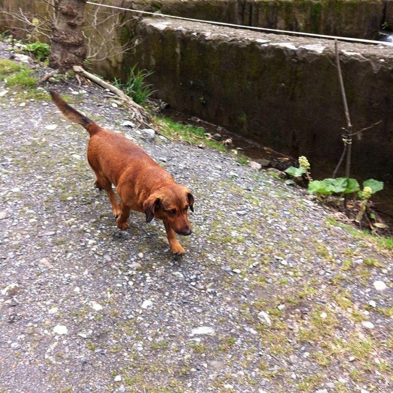 Masukiye Selale Doğa Nature kocaeli izmit travel trip gezi marmara kopek dog