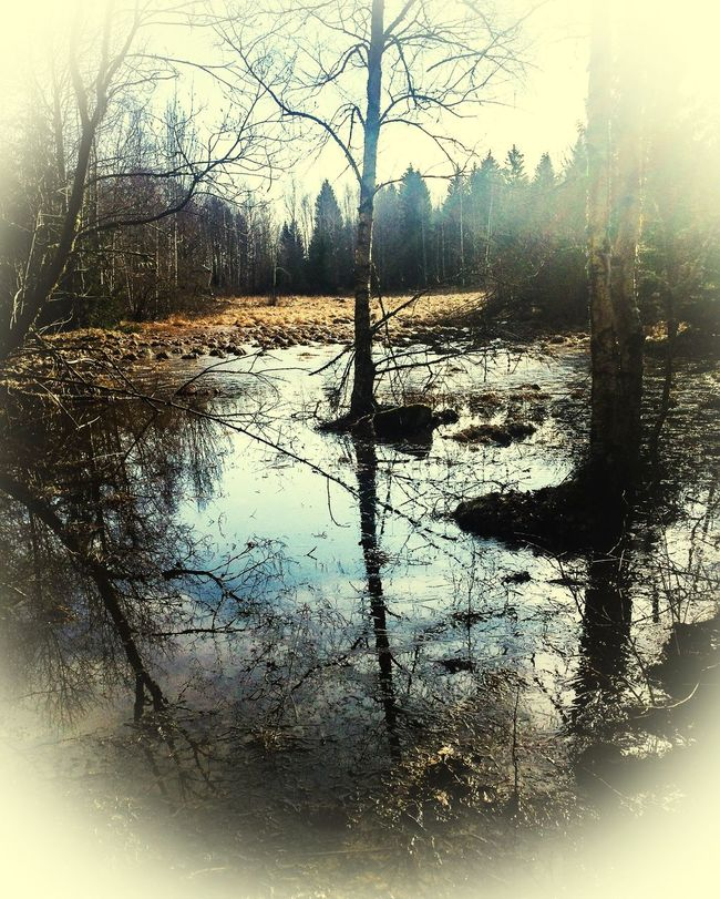 Strängnäs Magical Trees Magical Forest Forest Beautiful Nature In The Forest Enjoying Nature