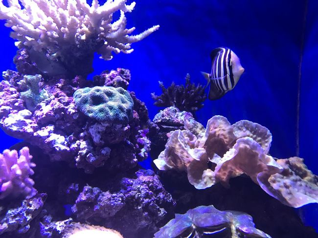 Underwater Sea Life Water Animal Themes Nature Swimming Purple Animals In The Wild UnderSea Coral No People Sea Close-up Aquarium Day