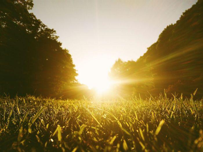 Enjoying The Sun Sunshine Sunset Light Sunset Park Hamburg Grass Meadow