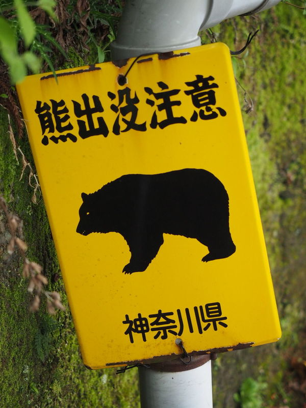 Bear Payattention Taking Photos Mountain Taking Pictures Japanese Shrine Olympus Om-d E-m10 Cloudy Day Ooyama