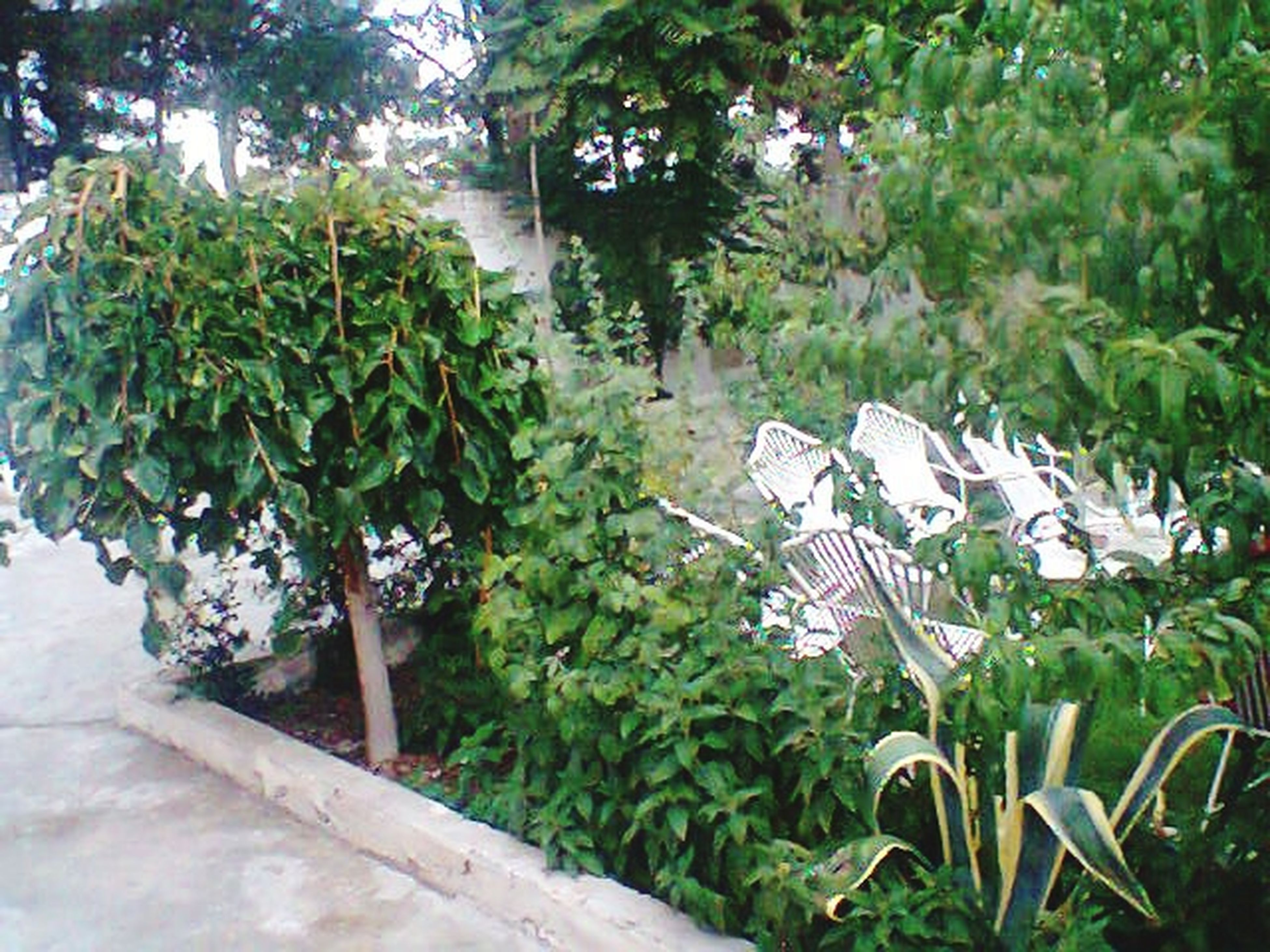 growth, plant, nature, leaf, no people, outdoors, tree, beauty in nature, day, greenhouse