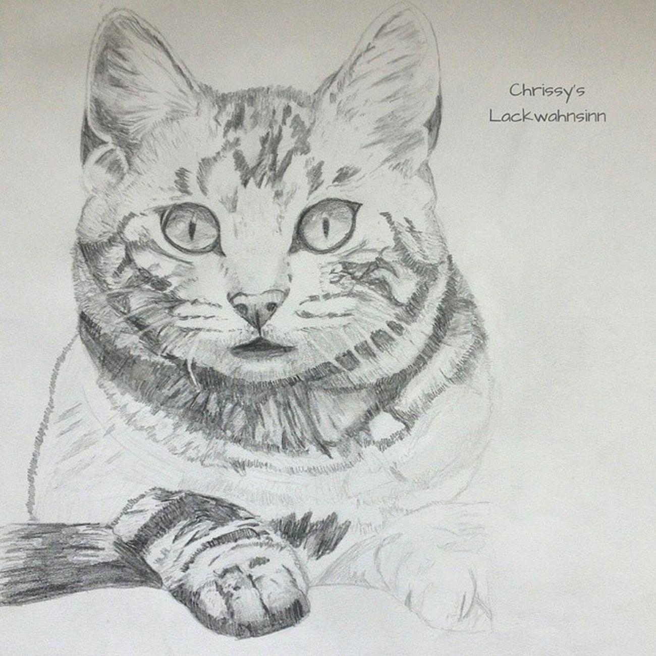 miau 😺😺 hab ich grad wieder beim fotos durchstöbern entdeckt 😁 diese miez hab ich in meiner zeit auf der fos (gestaltungszweig) gekritzelt ✏🎨 Kunstkram Fosgestaltung Katze Cat Miez Bleistiftzeichnung Undjetztwerdichinformatikerin 💻💾