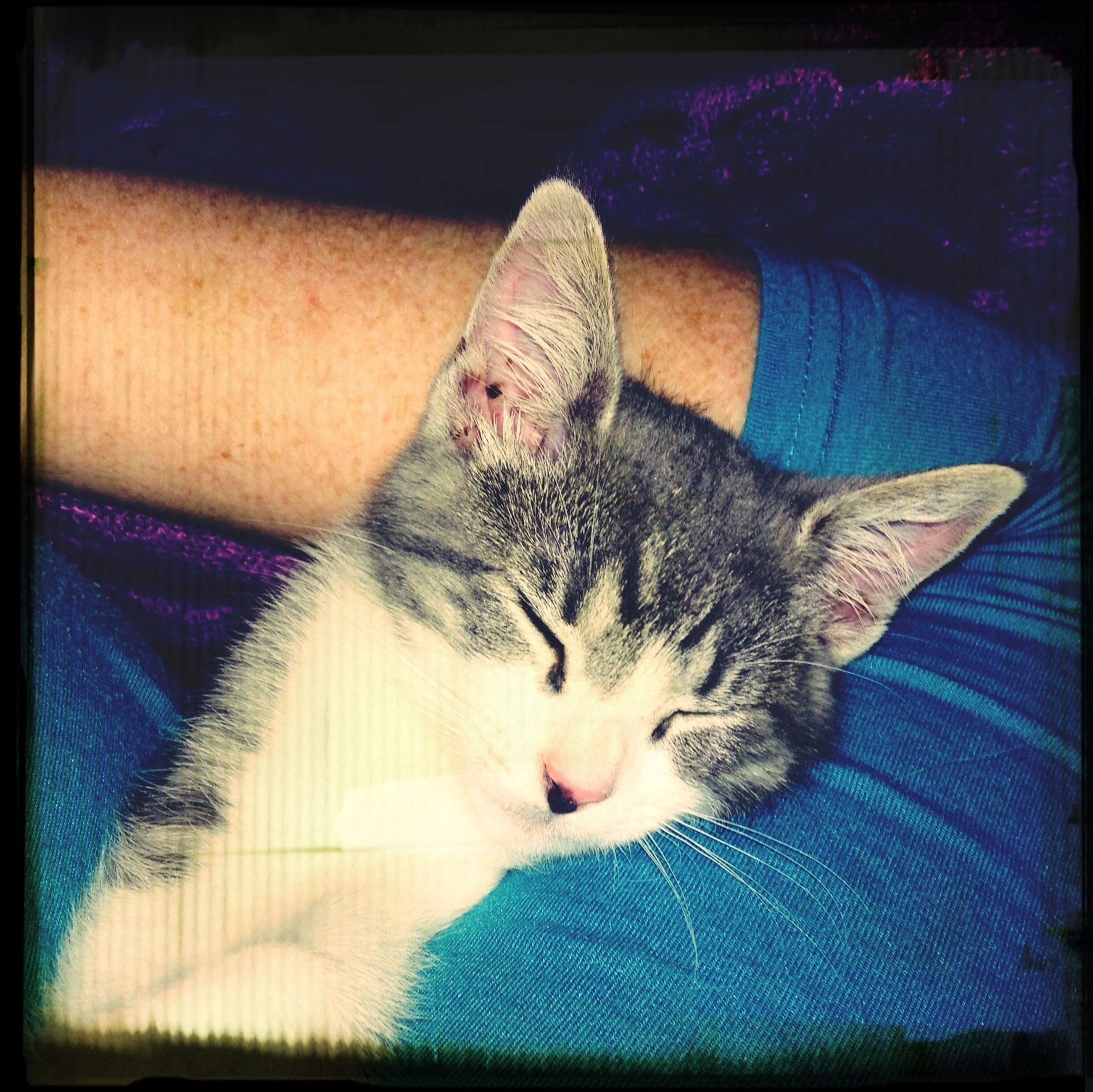 pets, animal themes, domestic cat, domestic animals, one animal, mammal, cat, indoors, feline, relaxation, transfer print, auto post production filter, resting, lying down, bed, whisker, portrait, looking at camera, sleeping, close-up