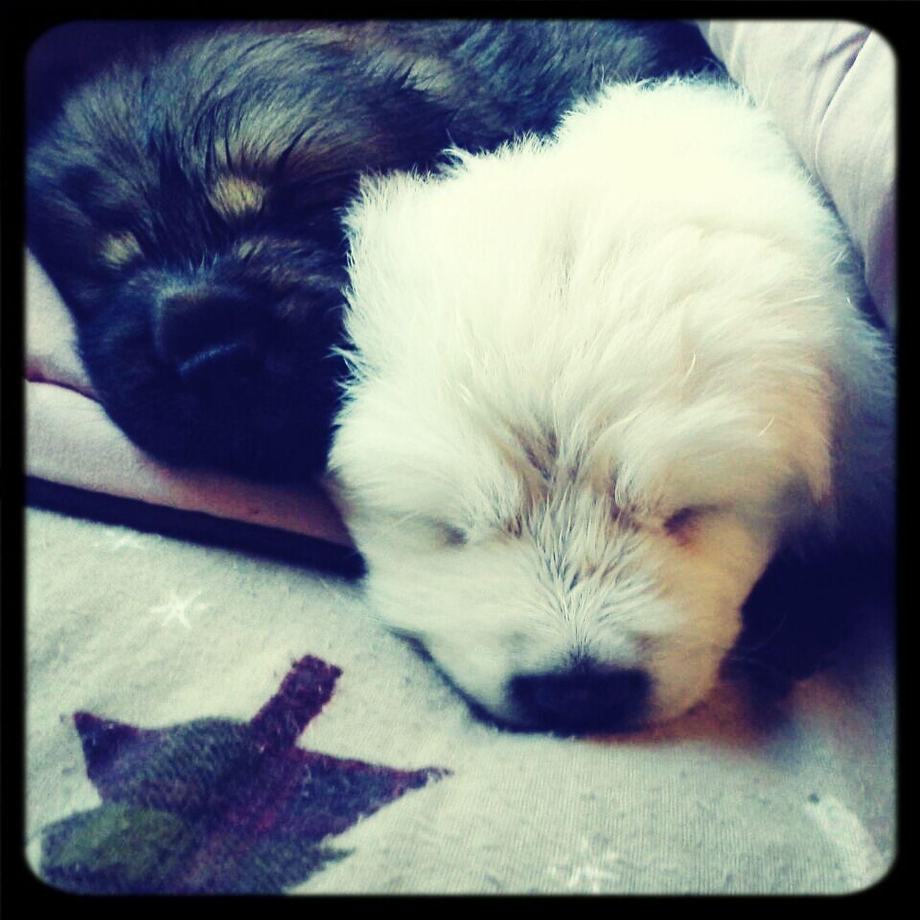 My Pups C: