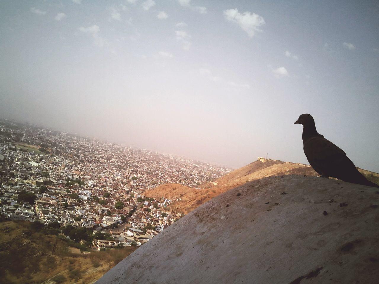 Thoughtful pigeon! Pegion Bird Height City View Cityscape City View  Thoughtful Thoughtfulbird Jaipur Rajasthan Jaipurdiaries Garh Ganesh Temple HillTopView India Taking Photos Smartphonephotography Lovetotakepics Jaipurtrip Jaipur,India