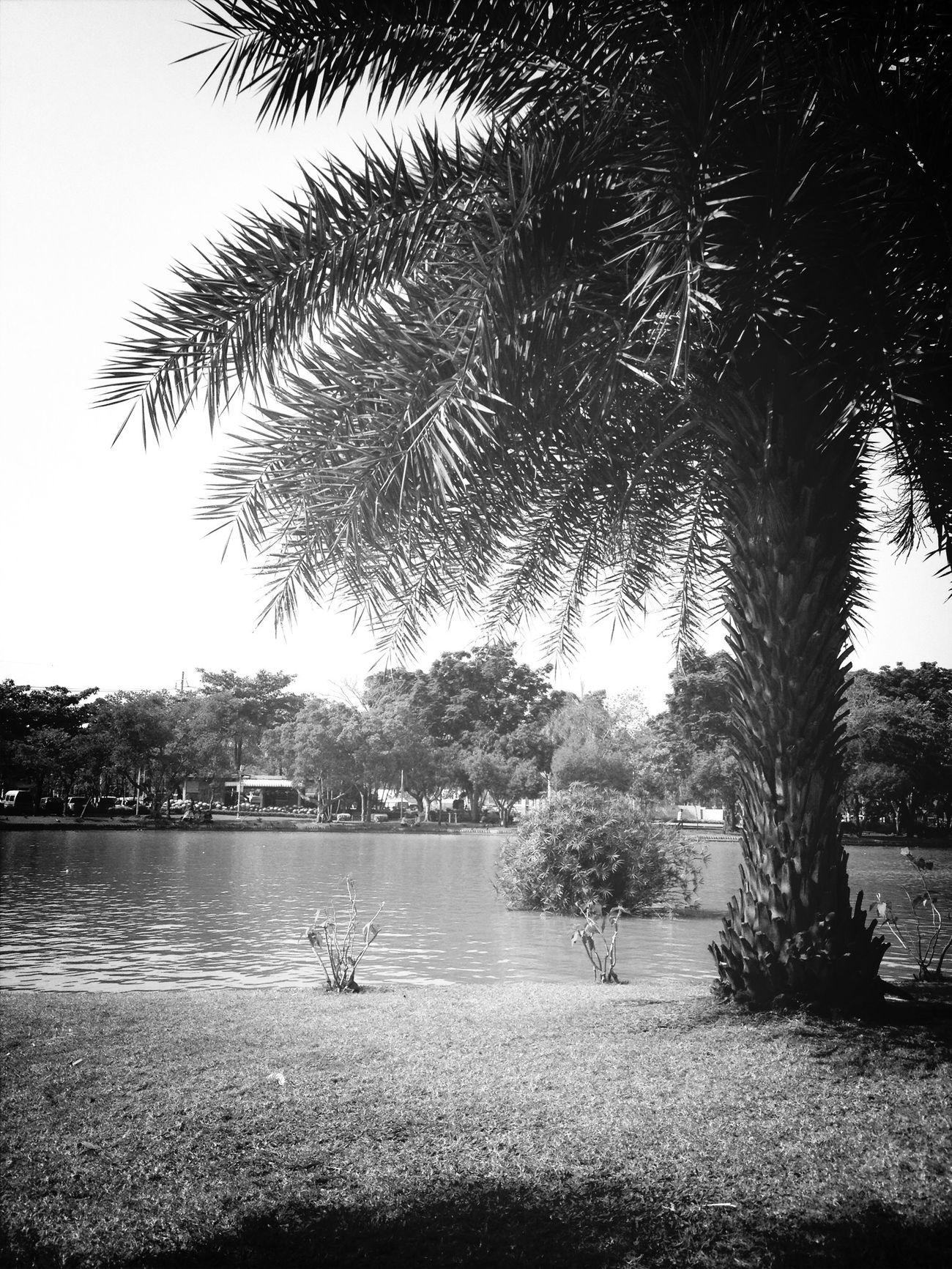 Relaxing Landscape Black & White