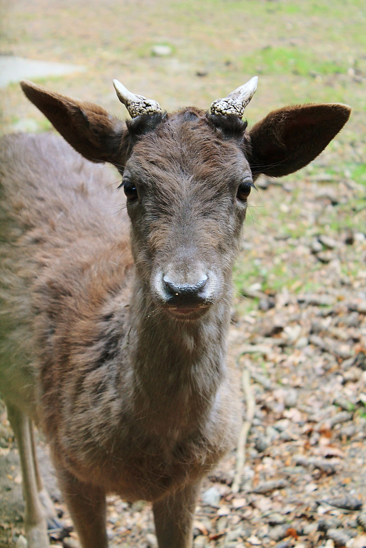 Beautiful stock photos of deer, Animal Themes, Animals In The Wild, Day, Deer