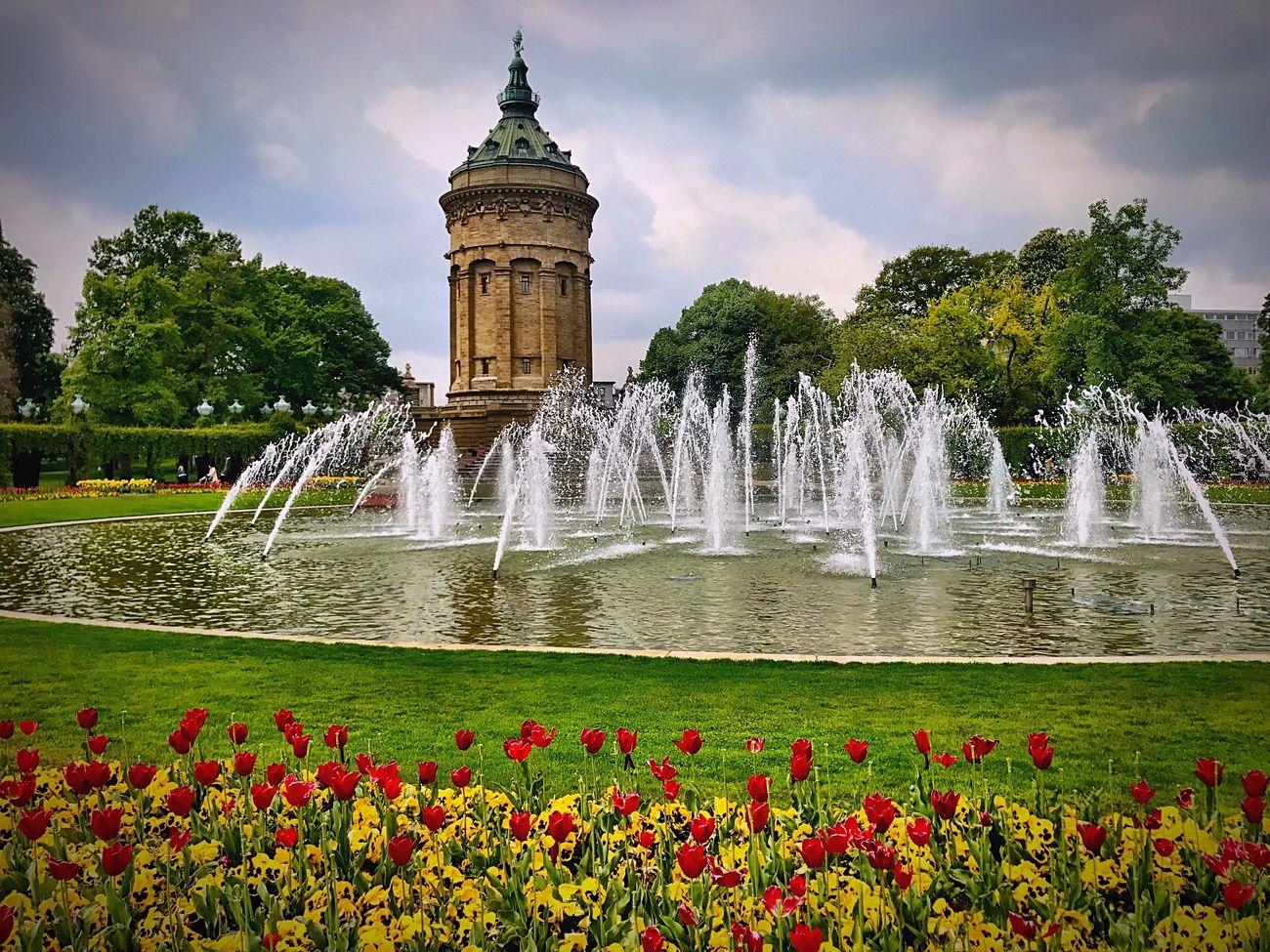 Mannheim Water Fountain Flower Splashing Wasserturm Wasserturm Mannheim  Watertower City City Life