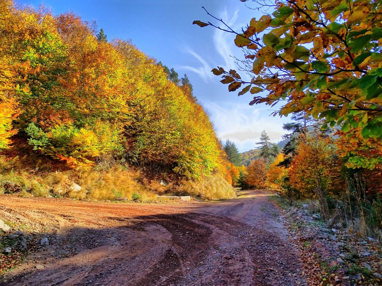 tree, autumn, nature, change, day, beauty in nature, leaf, outdoors, sky, growth, scenics, tranquil scene, no people, tranquility, road, plant, landscape