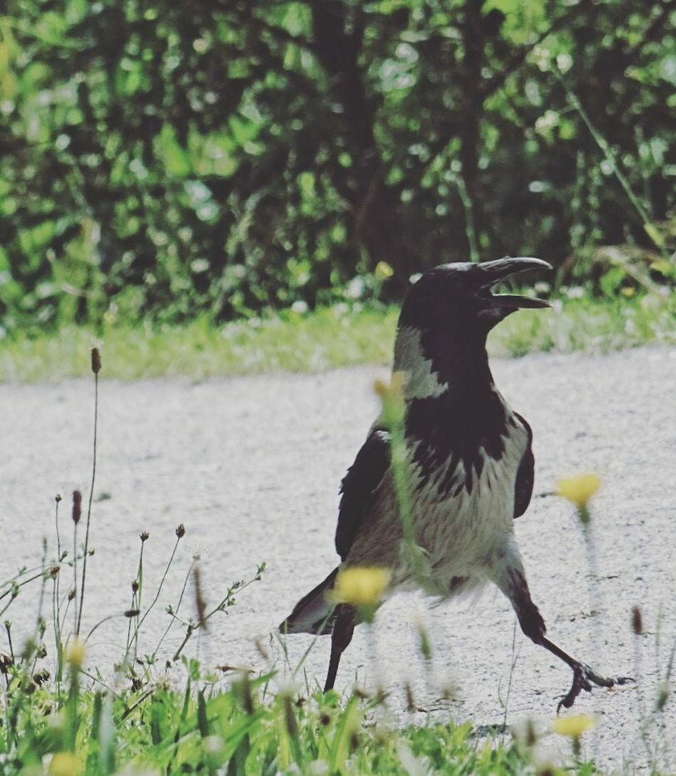 Like a boss Crown Birds Bird Walk Boss Compact Digital Camera Daily Walk