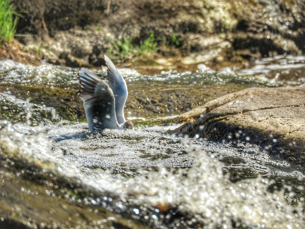 one animal, water, animal themes, nature, animals in the wild, no people, motion, day, outdoors, close-up