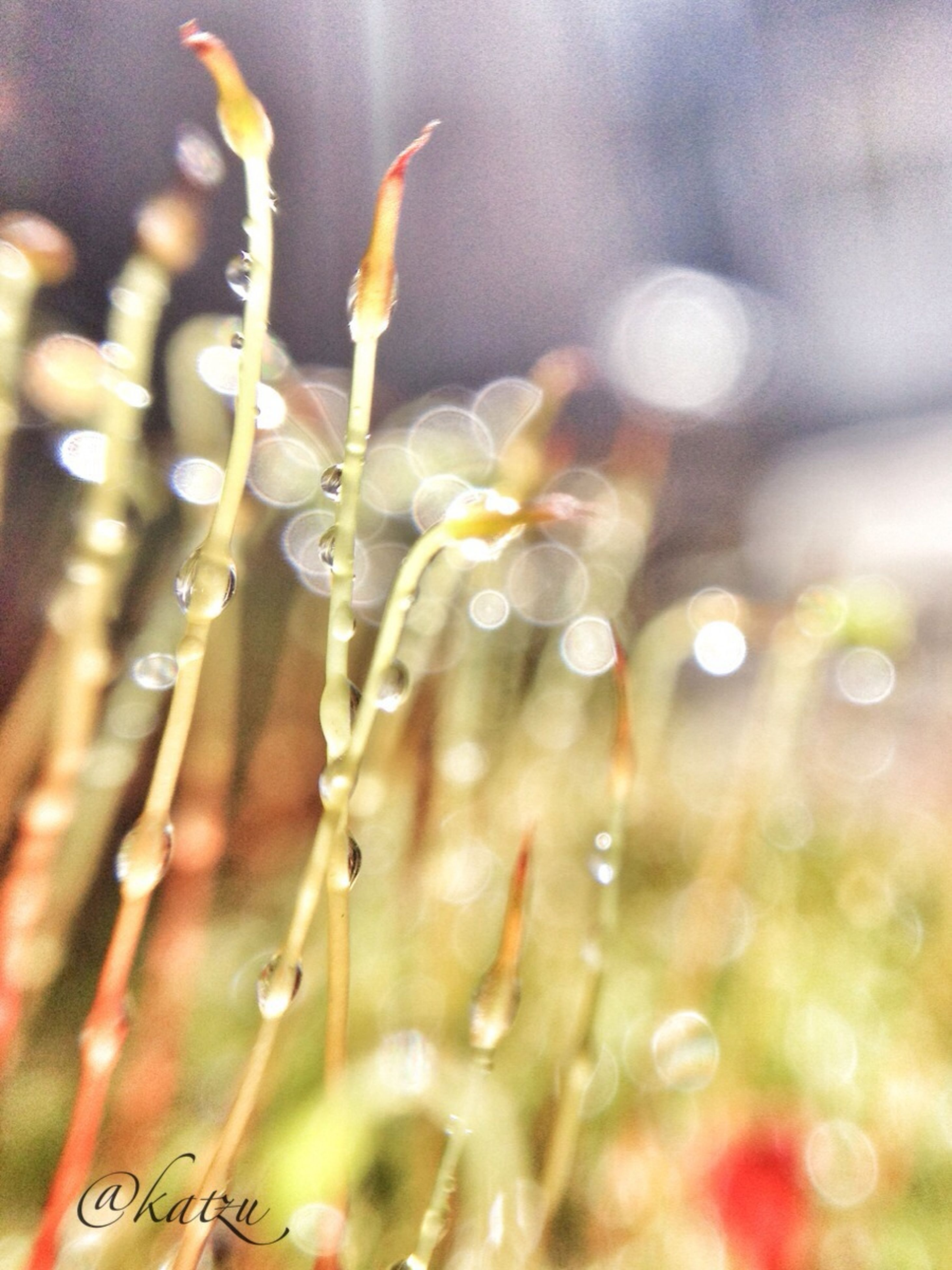growth, freshness, flower, close-up, focus on foreground, fragility, nature, beauty in nature, plant, selective focus, drop, bud, stem, water, wet, day, dew, outdoors, petal, no people