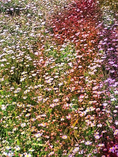 14 and this is my 1st photo edit i've ever done in my life Flowers Rainbow Amatuer Photo Editing