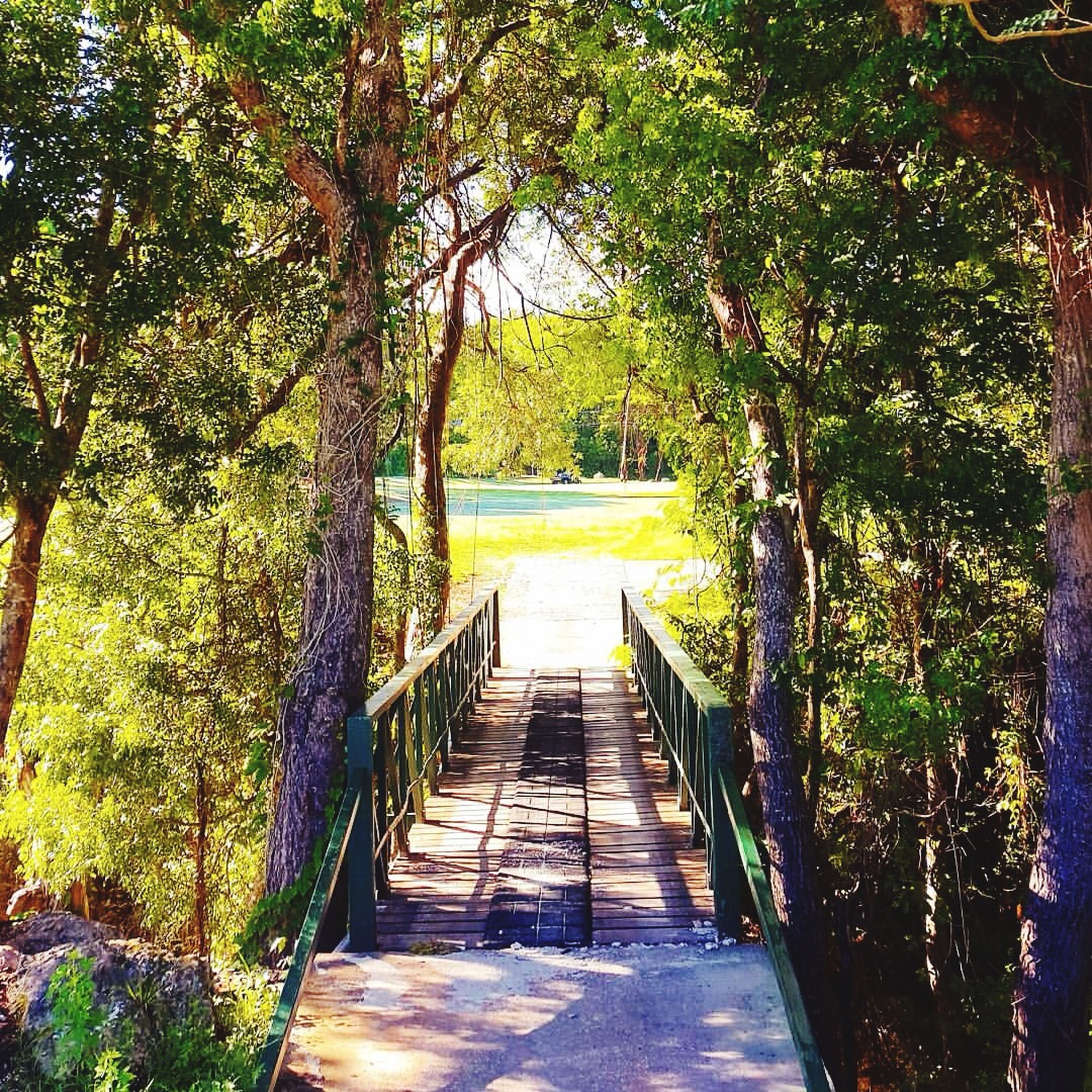 the way forward, tree, steps, walkway, built structure, narrow, growth, railing, footpath, architecture, pathway, plant, tranquility, nature, leading, diminishing perspective, steps and staircases, footbridge, boardwalk, sunlight