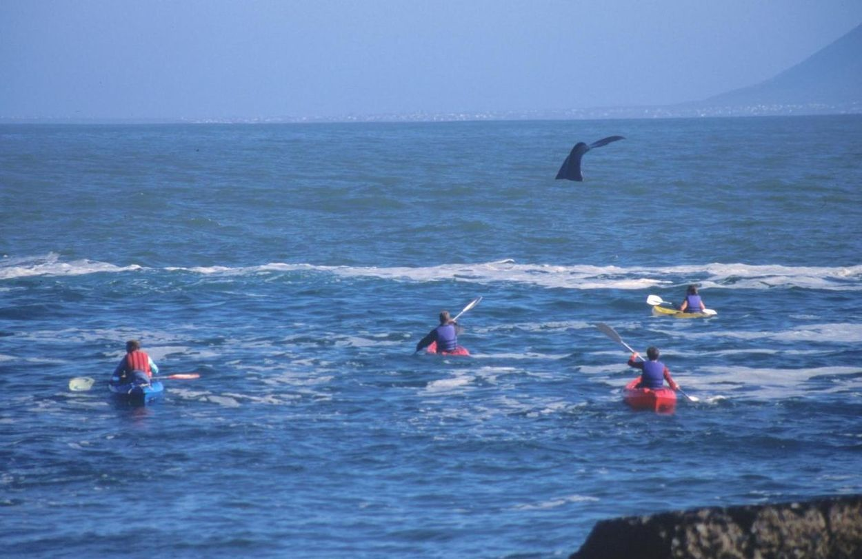 Africa African Beauty Elephants Hermanus Kayaking In Nature Kruger Park Nature Photography Serengeti National Park South Africa Tanzania Whale Wildlife & Nature Zimbabwe People And Places Enjoy The New Normal Chance Encounters Live For The Story Whale Breach Whale Tail Hermanus Adventure kayak Been There.