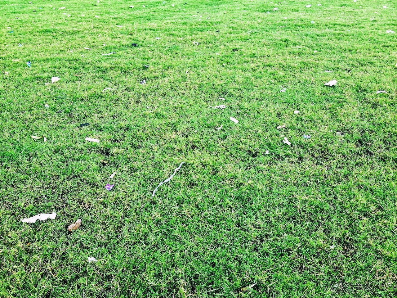 Grass Green Color Growth Nature Field No People Beauty In Nature Outdoors Day Rumput Lapangan