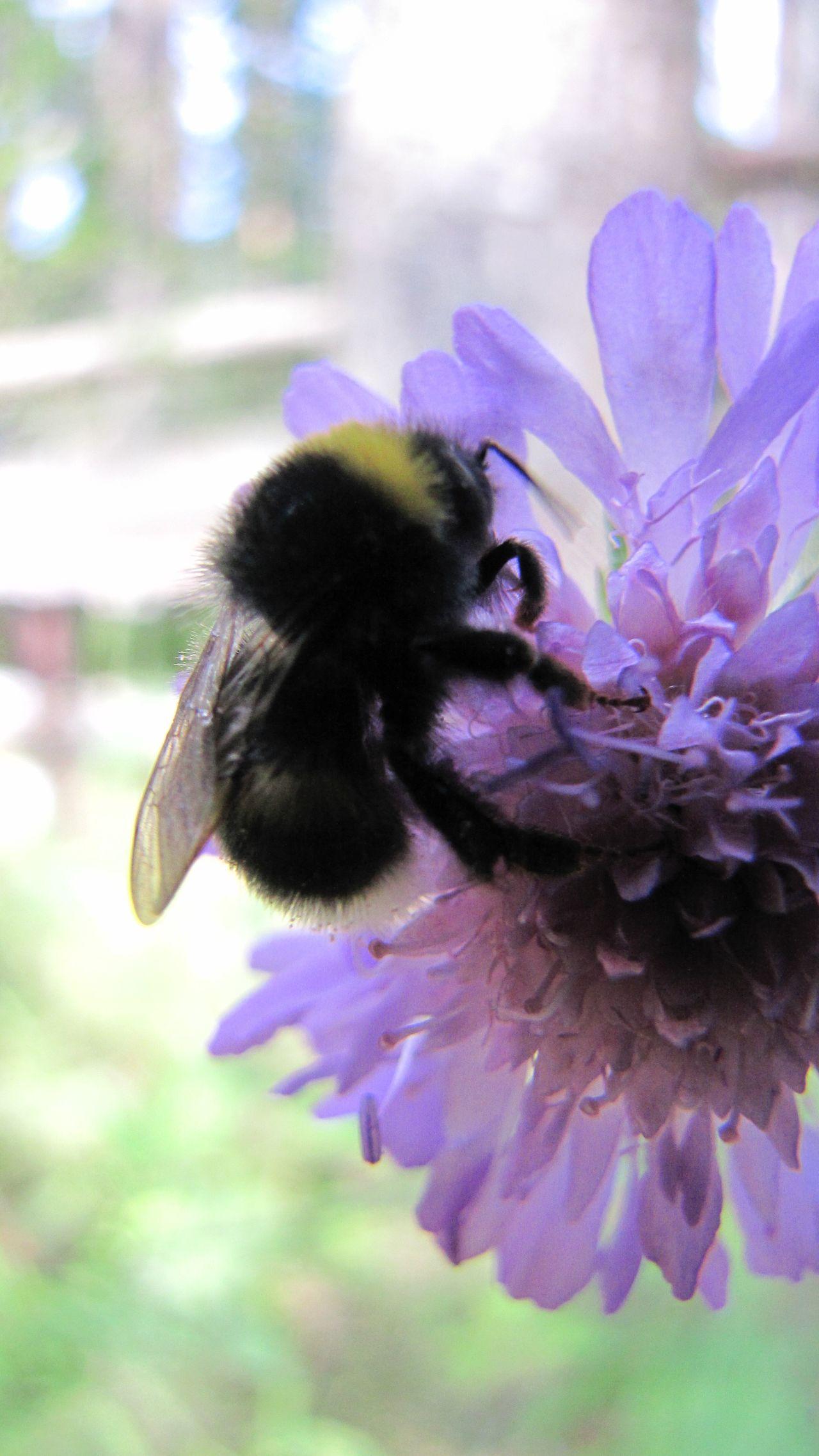 шмели шмель Hum Zoom Wings Green Bumblebee Bugs Beetle Violet Easter Ready