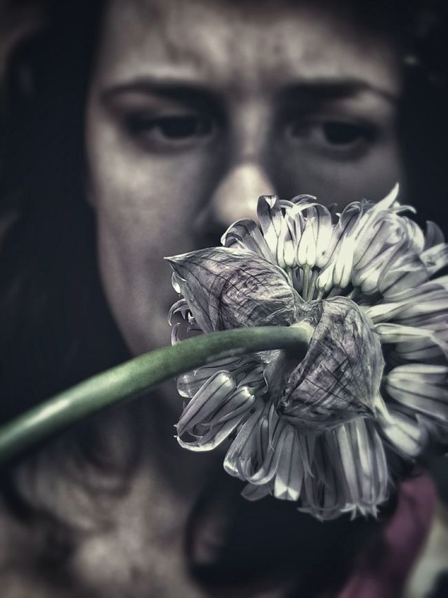 Allium Flower Chive ChiveflowerPortrait Macro Dramatic Edit Woman Natural Light Portrait Fine Art Photography