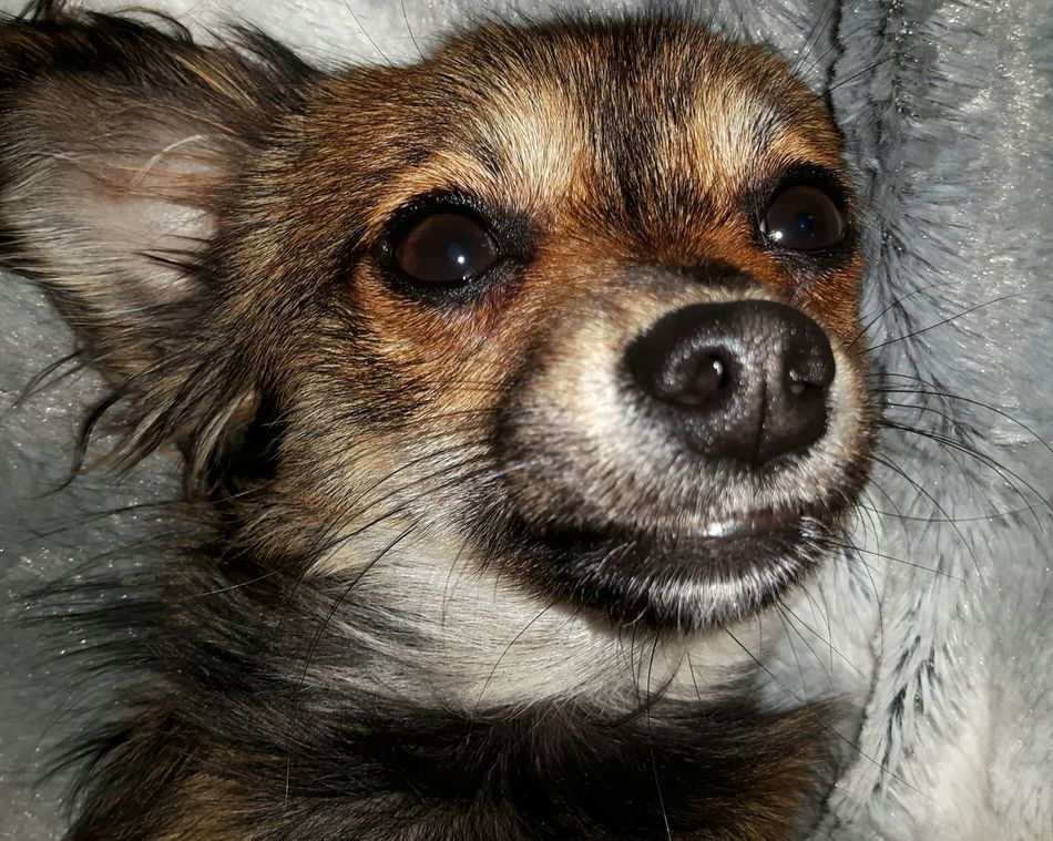 Good Night 🌛🌟⭐ Animal Themes Pets Day Domestic Animals Mammal Beliebte Fotos Germany🇩🇪 EyeEm Best Shots Hunde Liebe ♡ Eyem Collection Hundewelpe Hundefotografie Hundeleben Dogs Dogs Of EyeEm Dog Photography Dog