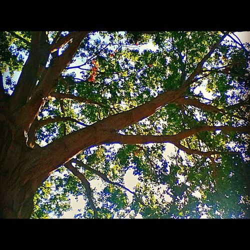 I am the vine, you are the branches Landscape Tree Autumn Reach Photooftheday Instamood Bestoftheday Instagood 20likes 15likes 25likes Ipone Instafoliage Treelimb