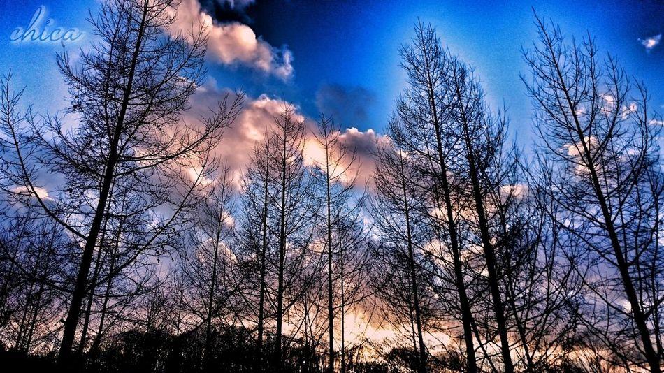 春眠不覚暁😪 Tree Low Angle View Nature Sky Beauty In Nature Sunset Dramatic Sky Hokkaido Landscape Photography 北海道 自然 木 Tree Area Tree Nature Sky And Trees 夕空 夕焼け空 夕陽 Sunset_captures Silhouettes Silhouette Skyscrapers