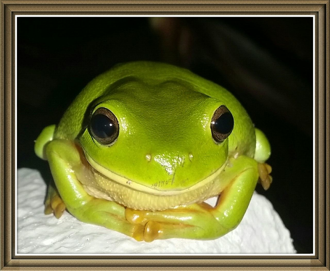 Capture The Moment Frog Nature Greenfrog Such a cute little guy!
