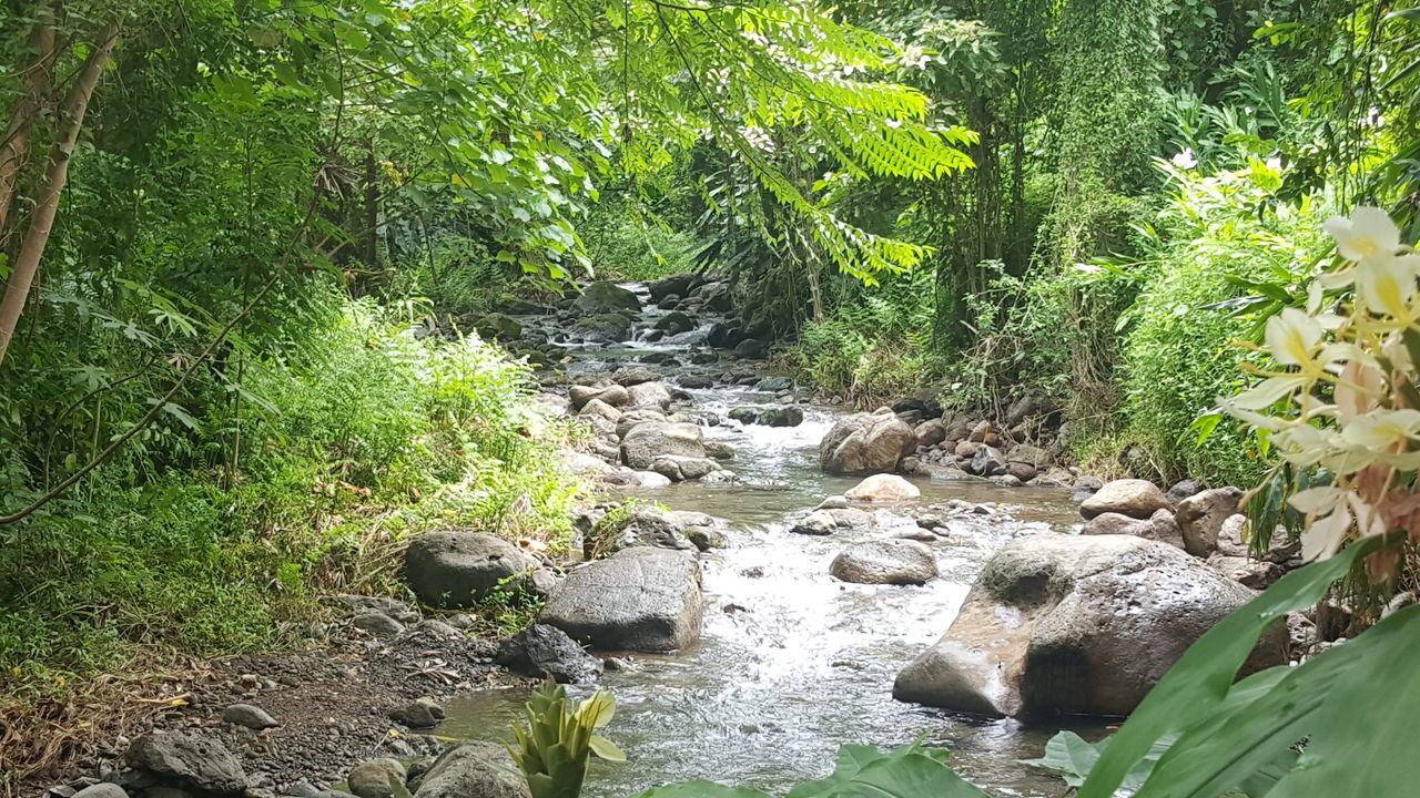 Power of peace Water Flowing Tranquility Nature Island Life Check This Out Jungle Trepeajung