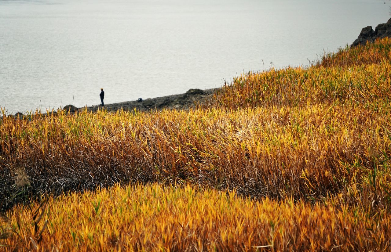 Korea Photos Reeds Autumn Colors Silhouette Landscape Fall Beauty