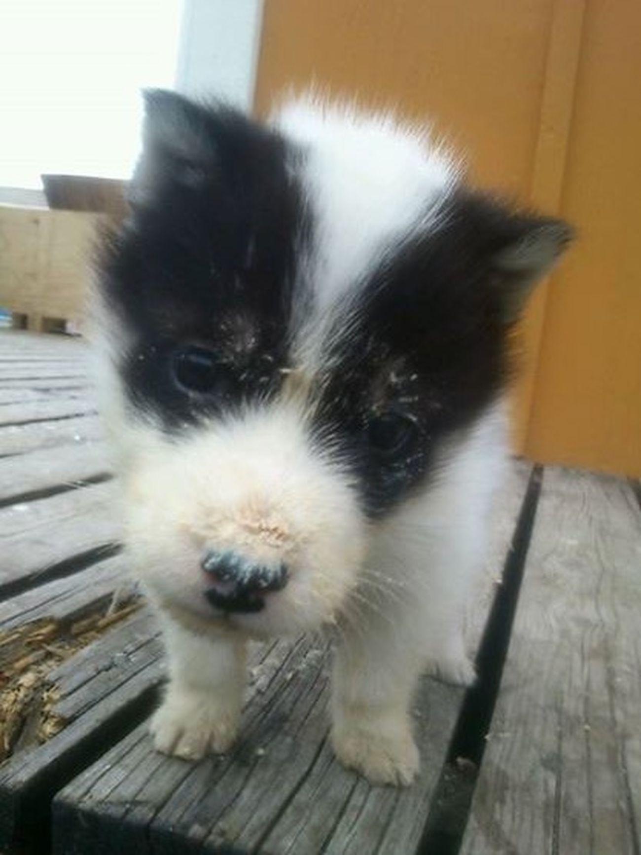 Hi baby i love you! Puppy Cute Loveyoutothemoonandback