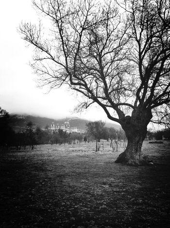 Árbol con vistas al Monasterio EyeEmBestPics EyeEm Best Shots - Black + White Shootermag Blackandwhite