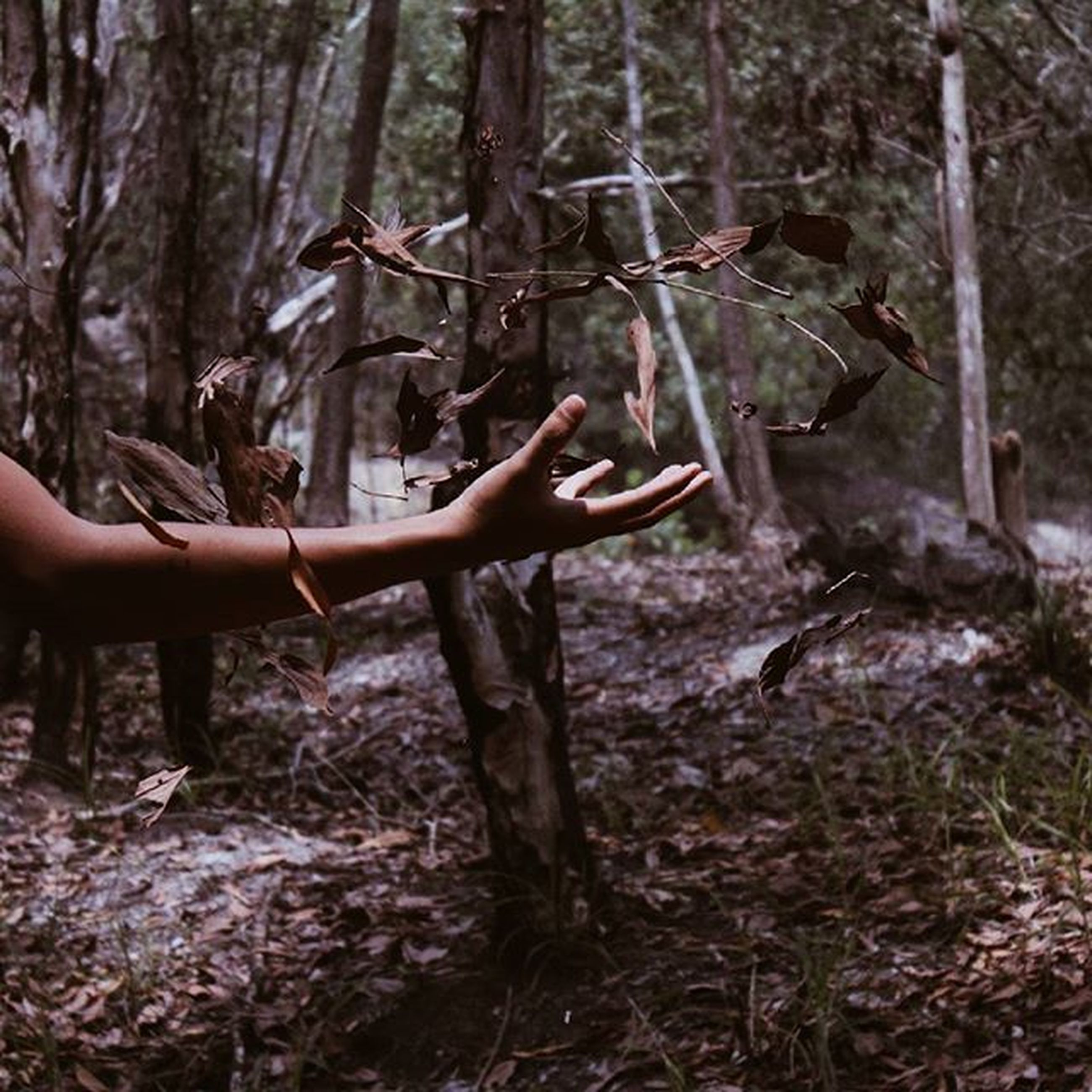 tree, tree trunk, forest, nature, tranquility, woodland, growth, branch, leisure activity, lifestyles, person, holding, day, outdoors, beauty in nature, part of, wood - material, root