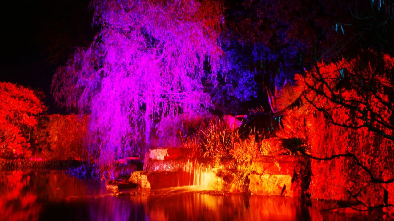 night, illuminated, tree, no people, beauty in nature, nature, stalactite, red, water, cave, scenics, outdoors, close-up