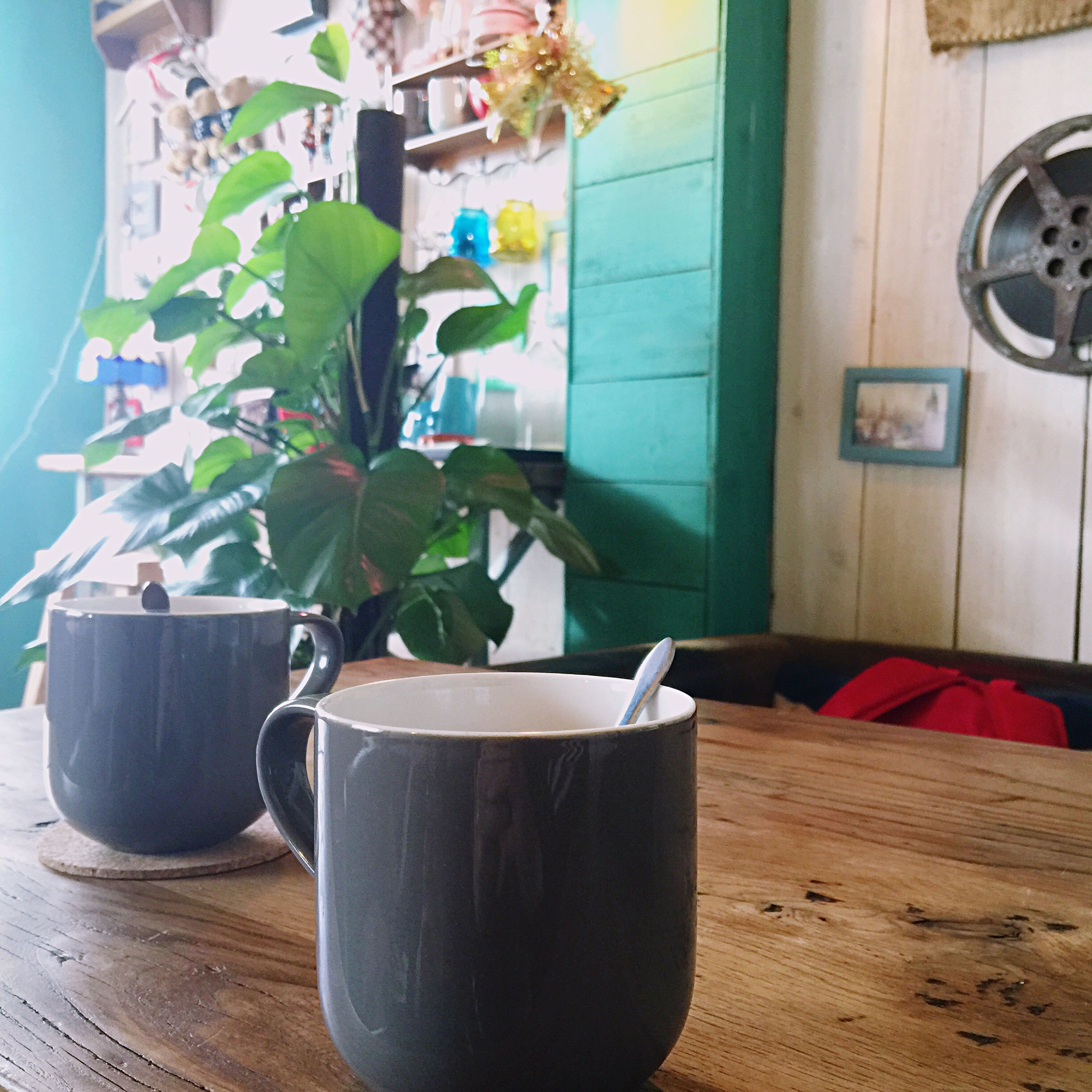 plant, potted plant, growth, nature, no people, leaf, indoors, day