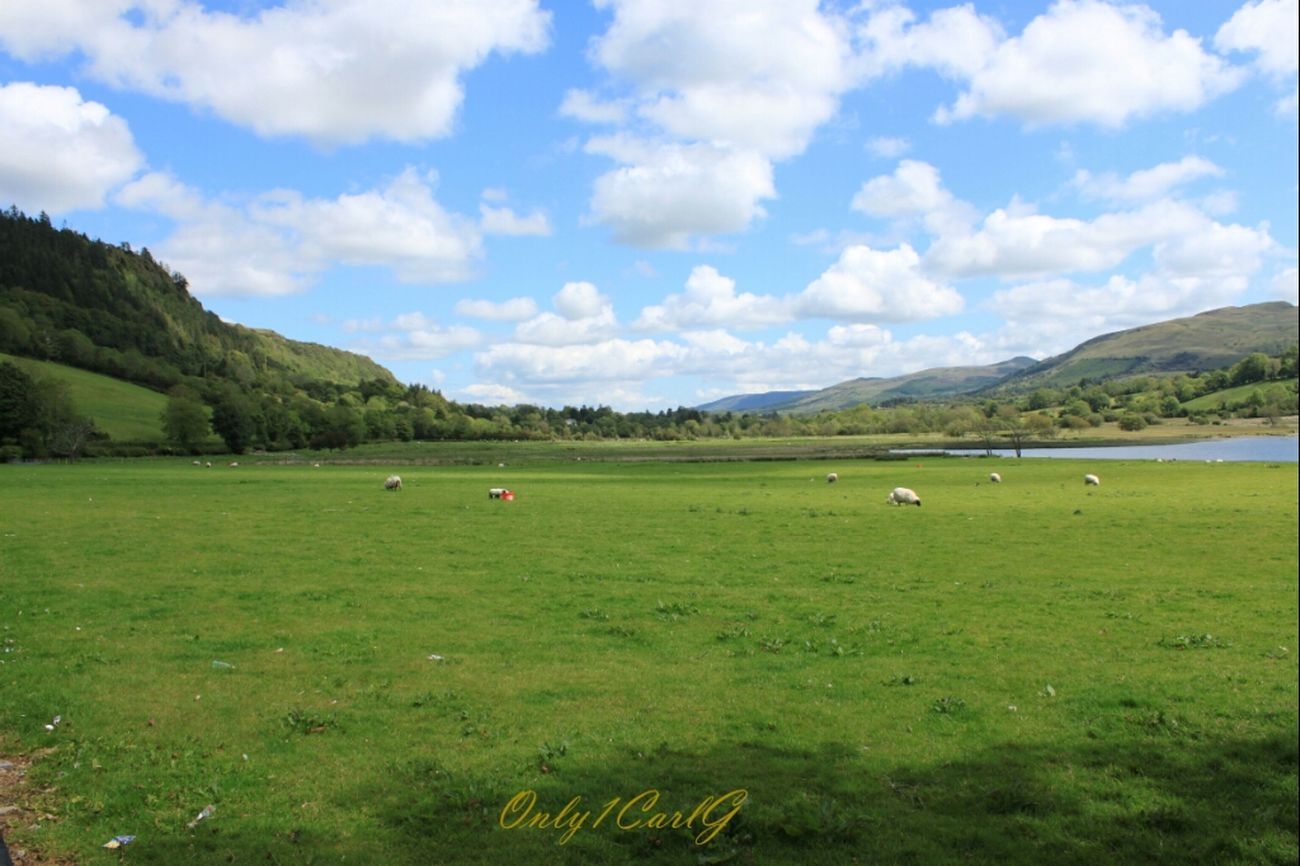 Clouds Beautiful Landscape Blue Sky Sheep Ireland TheMinimals (less Edit Juxt Photography) County Sligo Glencar Waterfall