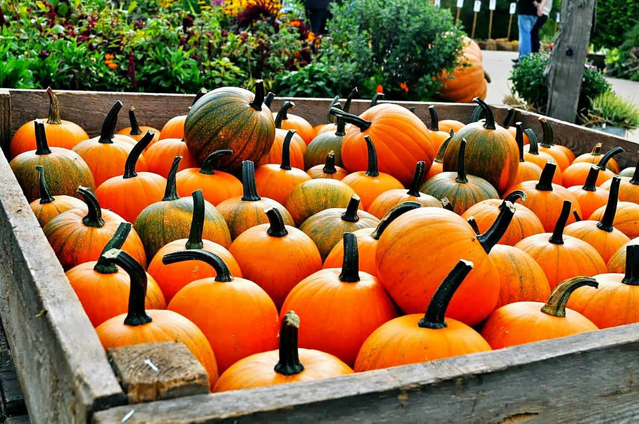 pumpkin, orange color, day, no people, outdoors, vegetable, large group of objects, halloween, nature, jack o lantern, freshness, close-up