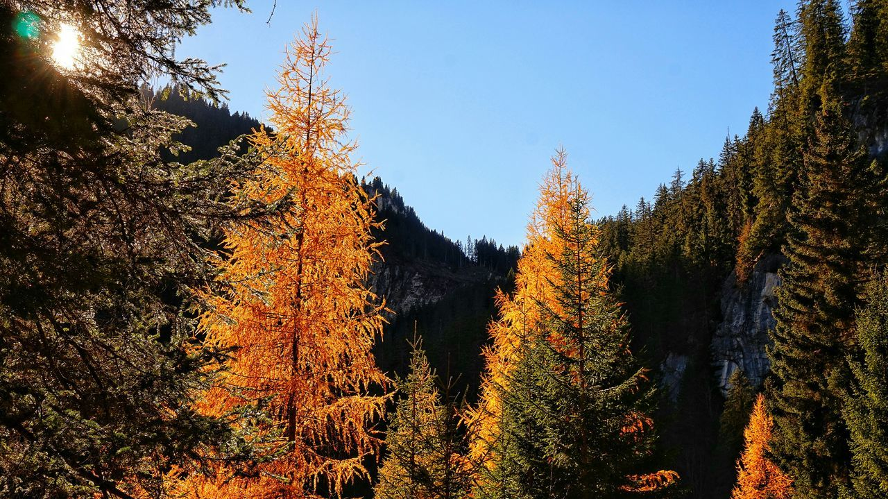 tree, nature, autumn, forest, growth, beauty in nature, no people, tranquility, mountain, outdoors, day, sky