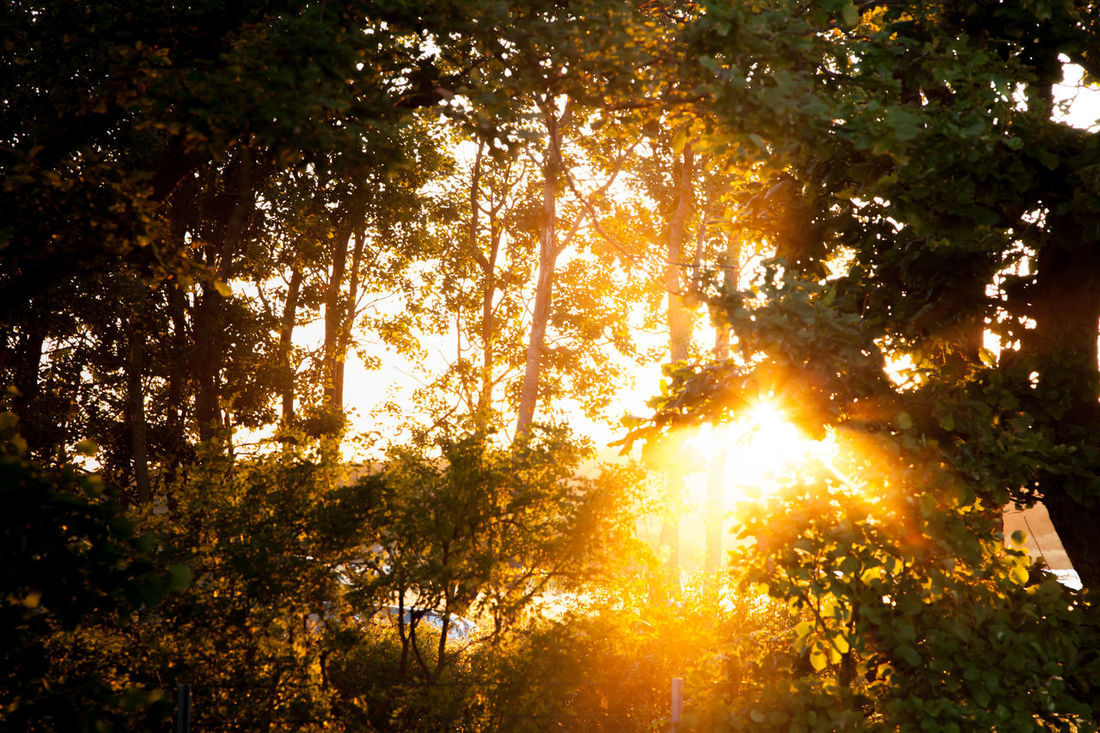 Light breaking through Art Is Everywhere Artistic Nature Norway Sunlight Foliage Foliage, Vegetation, Plants, Green, Leaves, Leafage, Undergrowth, Underbrush, Plant Life, Flora Forest Full Frame Golden Hour Sun Streaks Woods Paint The Town Yellow