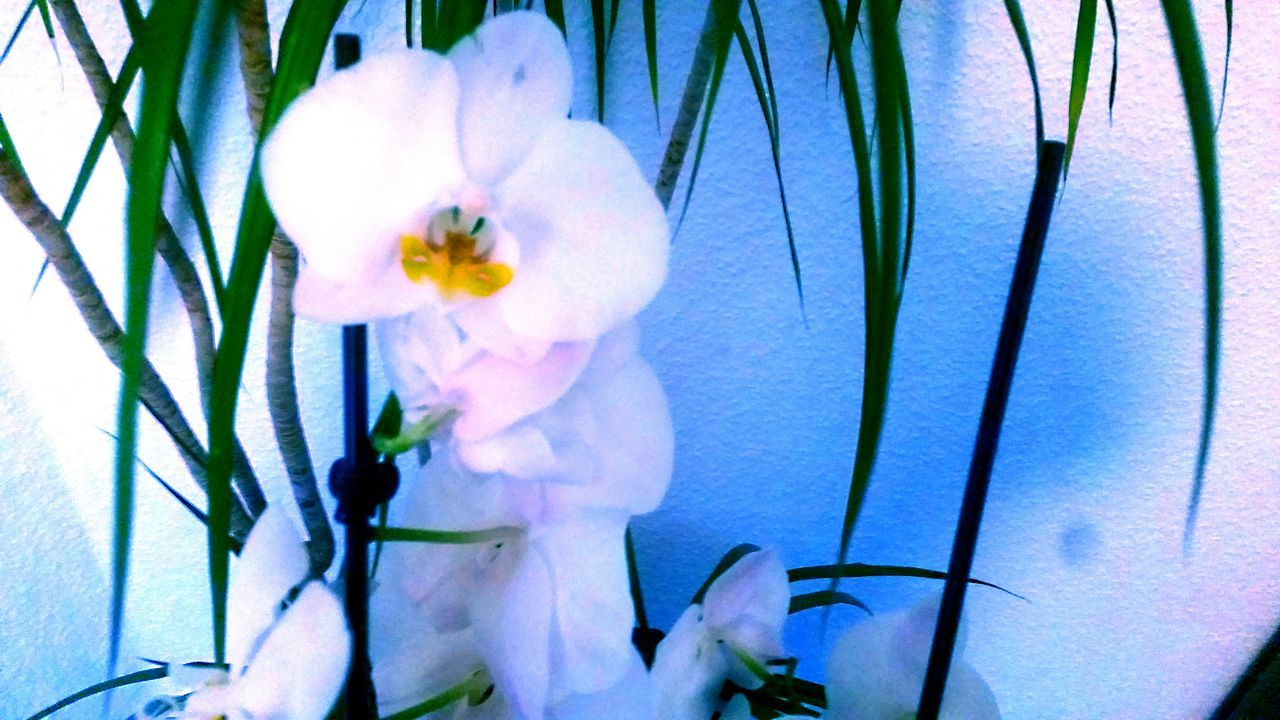Flower Growth Nature Plant Freshness Beauty In Nature Flower Head Leaf EyeEmBestPics EyeEm Best Edits EyeEm Best Shots Nature Photography Orchidee Orchids Collection