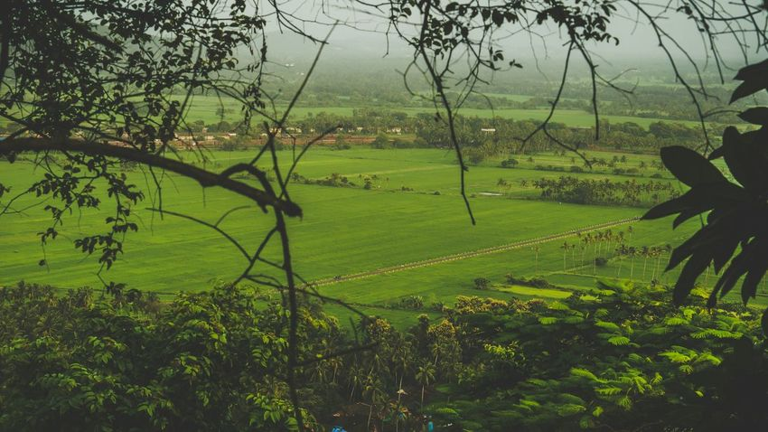 Nature_collection Agriculture Green Color Outdoors Field Beauty In Nature Landscape Growth Grass Freshness Beautiful Day Story Behind The Picture EyeEmNewHere Awardseyem Best Shots Photo Of The Day EyeEm Selects Wanderlust Goa Global Photographer-Collection 2017Eyeem EyeEm Best Shots Travel Destinations Enjoying The View