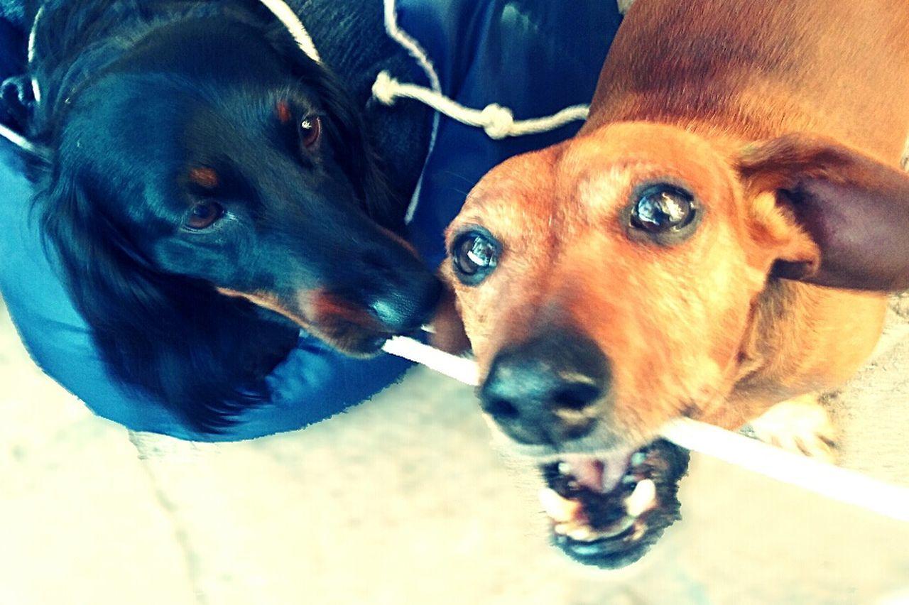 dog, pets, domestic animals, mammal, animal themes, no people, close-up, looking at camera, indoors, portrait, day