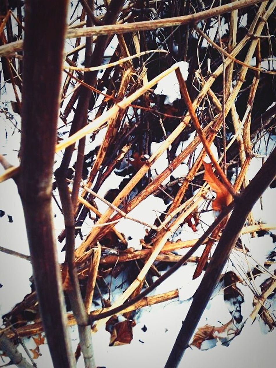 Reeds Broken Snow Urban Nature Nature_collection Winter_collection Winterscapes Bamboo In The Woods The Week Of Eyeem EyeEm Gallery Check This Out Hiking Trailblazer No People Beauty In Nature Beauty Of Decay Solitude Peaceful Sitting Outside Looking At Trees. Awesome_nature_shots