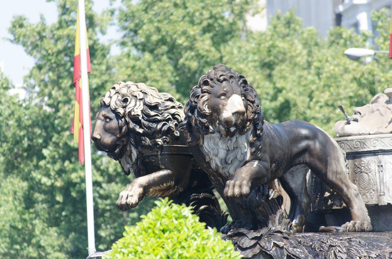 Arquitectura, Escultura y parques de Madrid, detalle de los Leones de la Cibeles 2013 Cibeles Close-up Cultures Day Eddl Lions Madrid No People Outdoors Sculpture Statue