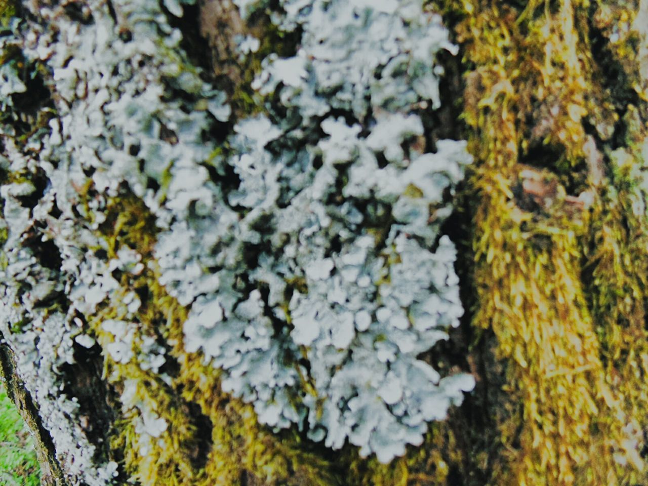Lychen Growth Moss Closeup Tree WoodLand